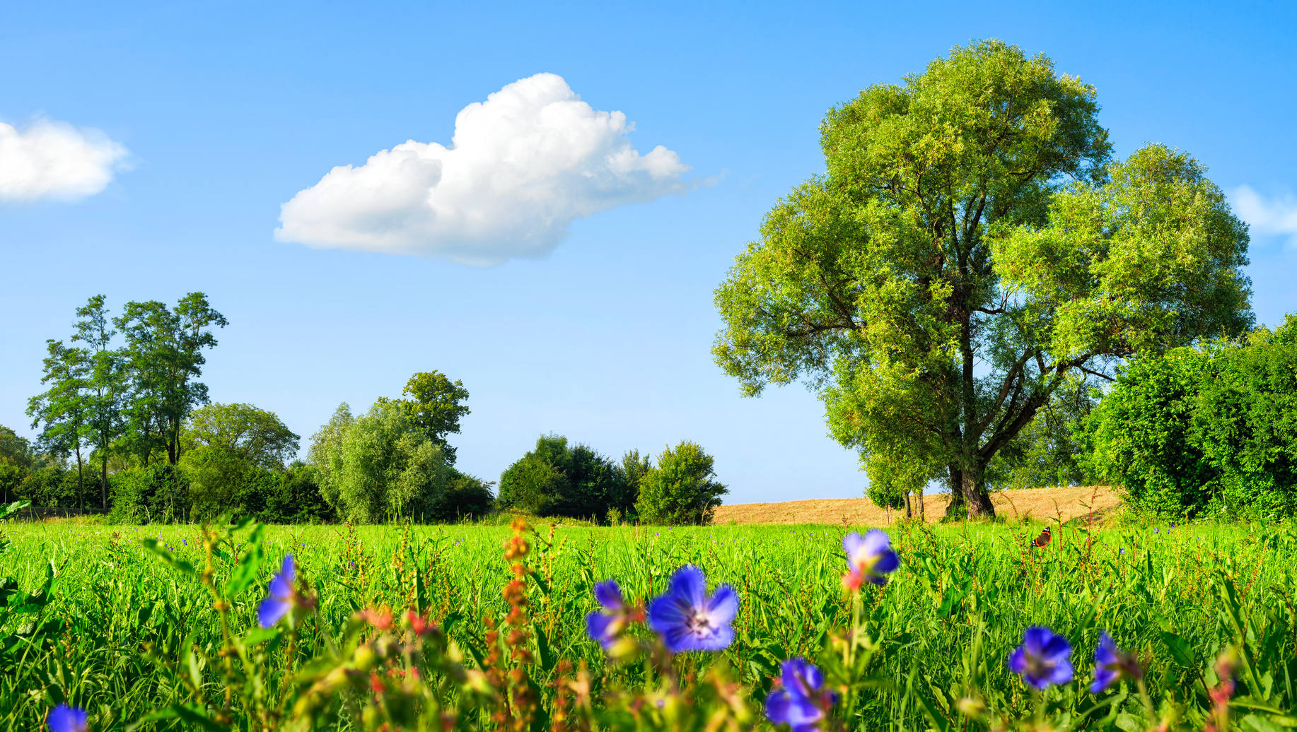 Idyllische Wiesenlandschaft mit Blümchen und Bäumen bei blauem Himmel